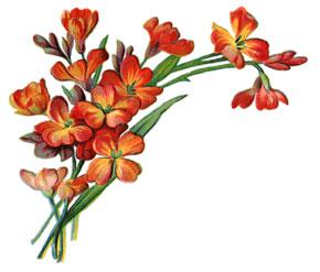 Flower-graphics-4